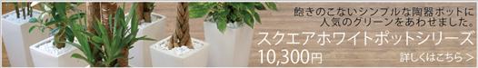送料無料 10,300円(税込)スクエアポットシリーズ